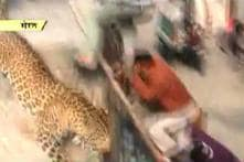 Alert sounded as leopard slips into Meerut