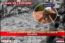 Watch: Leopard-villagers clash caught on camera in Maharashtra village