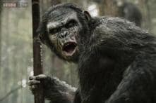 This human watch 'Dawn of the Planet of the Apes'. She like very much Caesar ape. Here's why