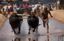 Rural Olympics, boat races, and buffalo races: 10 lesser known sports in India that you probably didn't know existed