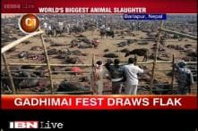 Nepal gears up for the biggest animal slaughter 'Gadhimai festival'