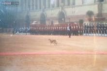 Dog takes a stroll at Rashtrapati Bhawan just before Obama's guard of honour