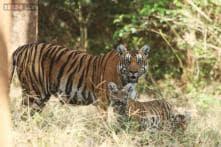 Prakash Javadekar and NGO squabble, time to put environment before dollars