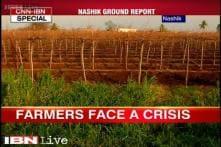 Nashik: Farmers face a crisis as rains damage major crops