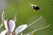 US man stung up to 1,000 times by bees survives