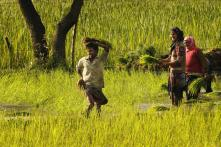 Cabinet hikes minimum support price of paddy, pulses to check price rise