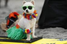 These dogs on surfboards are bound to give you a cuteness overload