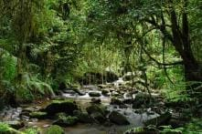 10 tropical rain forests that you should visit at least once in your lifetime
