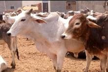 Five Including 3 Chinese Nationals Arrested for Carrying Beef in Nagpur
