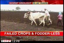 Karnataka sees worst-drought in 40 years
