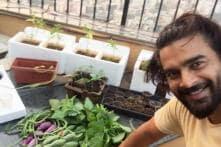 Rana Daggubati to R Madhavan: Southern stars share special moments on social media