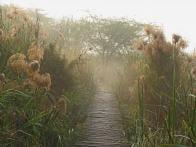 Okhla Bird Sanctuary: A study in decay