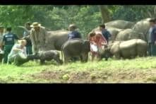 After Royal Couple's Visit, Rhino Dies in Assam's Kaziranga Park