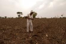 Kids Left to Fend for Themselves as Marathwada Farmers Commit Suicide