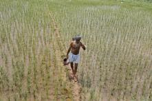 Unable to Repay Loan, Punjab Farmer, His Mother Commit Suicide