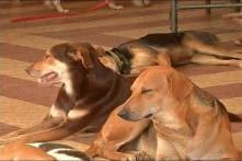 Seven Dogs Found Dead in Delhi's Dwarka, Resident Alleges Animal Cruelty