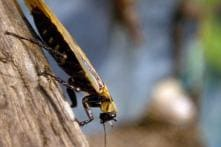 Cockroaches Also Use GPS to Move Around