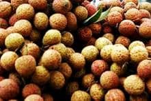 Indian Scientists Extend Shelf-life of Litchis