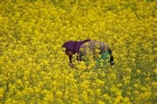 GM Mustard Gets Regulator Nod Amid Opposition from RSS-affiliate