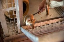 Mountain Out of a Molehill: Police Rush in to Find Rats Had Set Off the Burglar Alarm in UP Bank