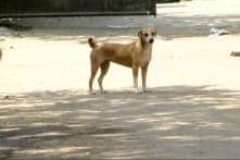 Locals Petrified by Dog Attacks in Kerala