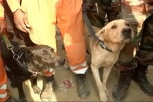 Watch: Channo And Bunty On Work to Sniff Out Bodies or Survivors