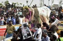 Jallikattu Ordinance by TN Gets Centre Nod, to be Sent to President Tomorrow