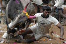 Jallikattu Ban: Don't 'Ignore' Tamil Aspirations, AIADMK Tells Centre