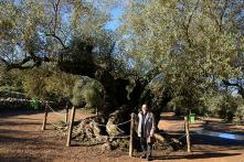 Olive's Branch: People are Adopting Trees to Help Breathe New Life into Dying Village
