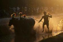 Allowing Kambala Leaves Black Mark on India: PETA