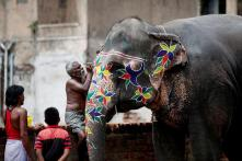4 Elephants From Assam to be Sent on 'Cruel, Stressful' Train Trip for Rath Yatra Festival in Ahmedabad