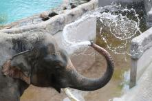 In Latest Case of Man-Animal Conflict, Three Elephants Found Poisoned in Malaysia