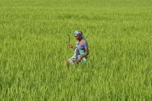 As Agriculture Sector Gasps for Breath, Will Nirmala Sitharaman Give the Nod to Liberalisation?
