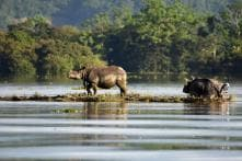 Skeletal Remains of Missing Rhino Found, Assam Forest Officials under Lens for Filing Wrong Report