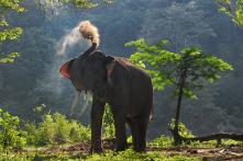Man Crushed to Death While Trying to Take Selfie With Wild Elephant
