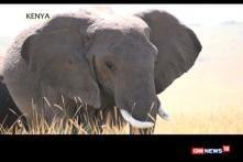 Watch: Wildlife Photography Masterclass in Kenya