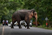 Elephants on a Rampage in Odisha Districts, Kill Two; Forest Dept on Guard