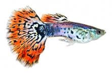 Fish are Individuals with Complex Personalities: Study
