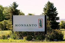 Monsanto Patent Victory On GM Cotton Seeds Expected To Step Up Biotech Investment in India