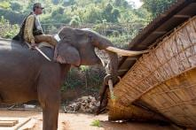 Police Use Elephants To Demolish Illegal Homes in Guwahati
