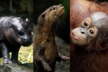 In Pictures: Newborn Baby Animals at Singapore Zoo