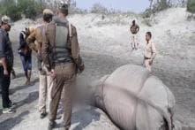 Rhino Killed by Poachers in Kaziranga, 5 Elephants Mowed Down by Speeding Train in Assam