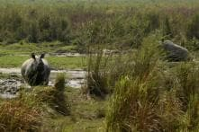 Kaziranga National Park's Two-Day 2018 Rhino Census Ends