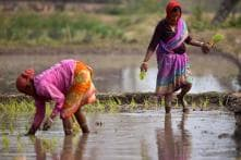 Women Farmers Sow Hard Work, But Are Reaping Hardships