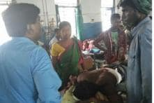 Royal Bengal Tiger Spotted in Lalgarh Attacks Three, One Remains Critical