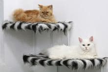 Iraq's First 'Cat Hotel' Opens in Basra; See Pictures