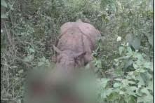 Poachers Kill Fourth Rhino in Kaziranga This Year, Decamp With Horn
