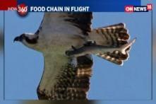 Watch: Shark Turns Bird Bait