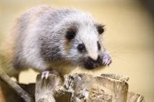 Ratted Out: Real-time Map Aims To Plot Paris Rodent Sightings
