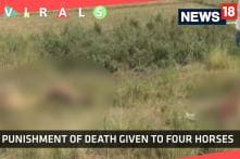 A Community Killed Four Horses But Why?
